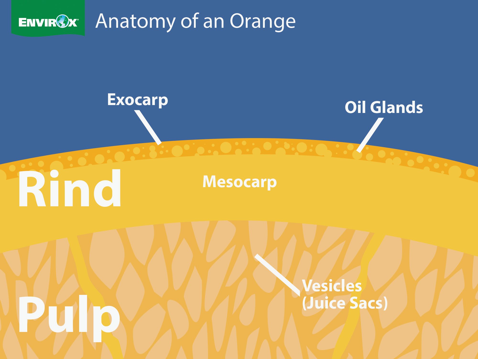 Orange Oil Cleaning A Powerful Combination Envirox